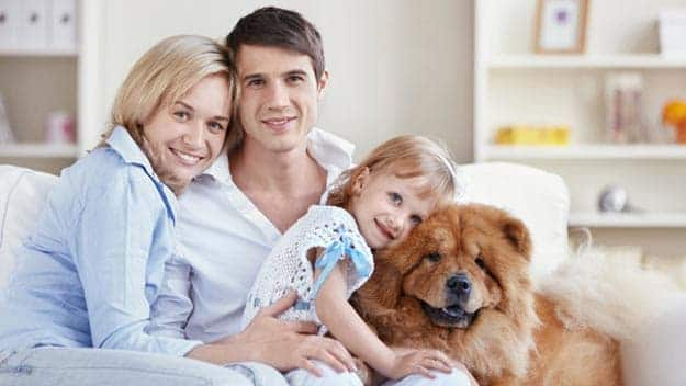 Wills & Trusts dog-young-family Direct Wills Northwich